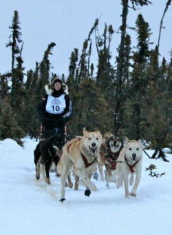 Gallery in addition Gallery further 1 further Gallery further Gallery. on gps tracker iditarod html